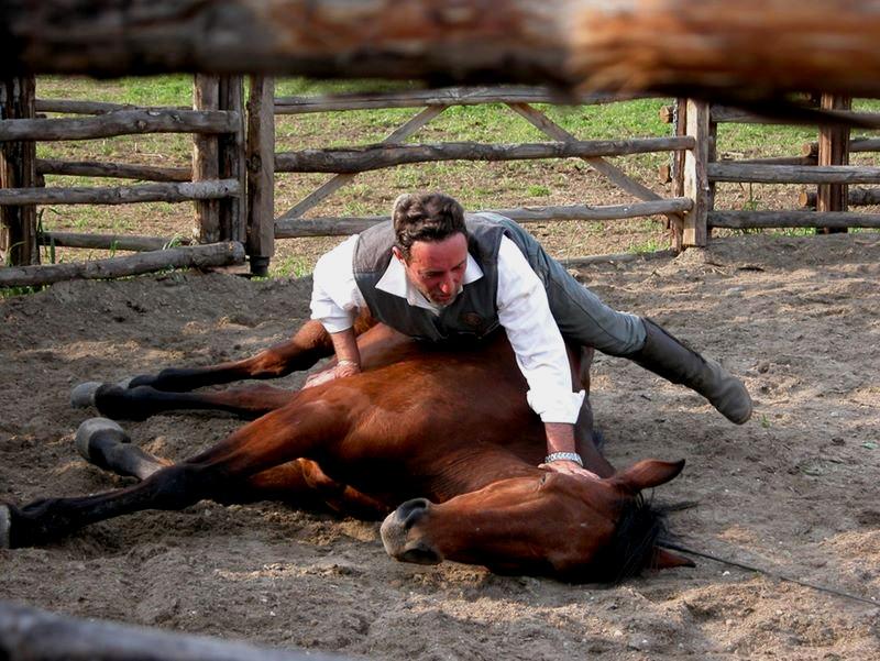 Buttero che addestra un cavallo maremmano