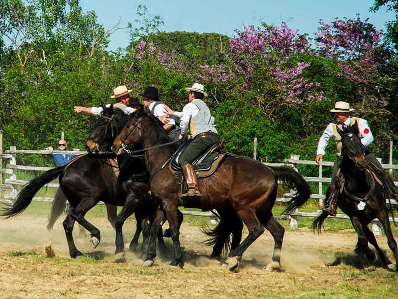 Butteri della Maremma al gioco della rosa in sella a cavalli razza maremmana